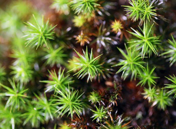 平溪 採苔、苔缸、苔山水